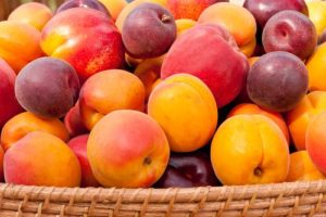 alkalizing nectarines recommended by mayo clinic